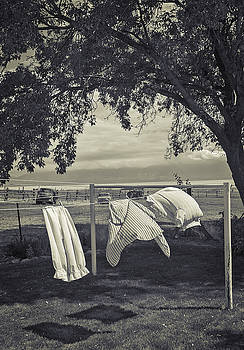 Steve Ohlsen - Out to Dry - Antelope Island State Park