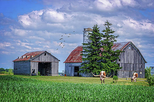 Out to Pasture by Mary Timman