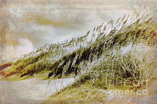 Dan Carmichael - Outer Banks Memories 4