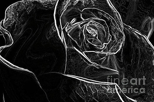 Outline of a rose by Micah May