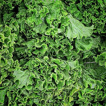 Lovely Lettuce by Lewis Mann
