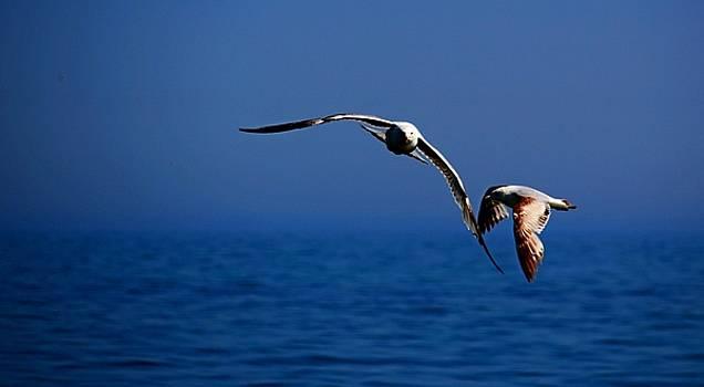 Over the Gull We Go by Amanda Struz