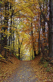 Over The Hill and Through the Woods in Autumn by Barbara McMahon