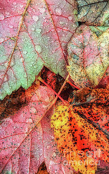 Overnight Rain Leaves by Todd Breitling