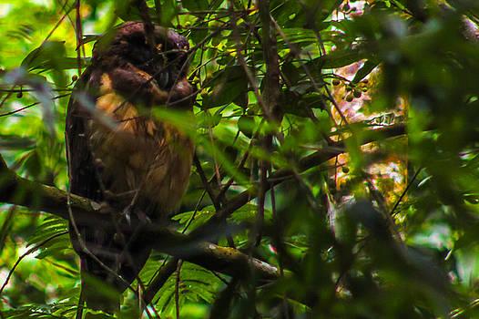Owl-1 by Fabio Giannini