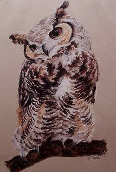 Owl by Donna Teleis