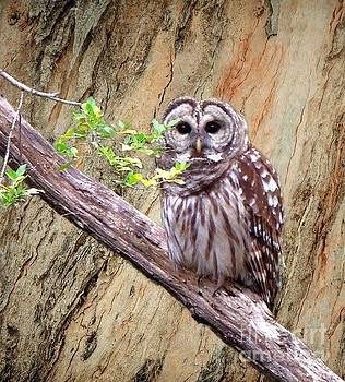Owl in Forest by Pete Trenholm