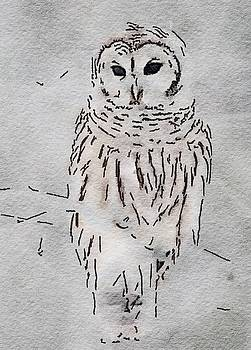 Owl in white by Steven Clayton