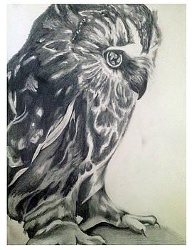 Owl 2016 by Paulina Lwowska