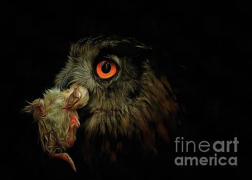 Owl with prey by Michal Boubin
