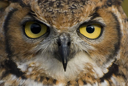 Owls Eyes by Pixie Copley