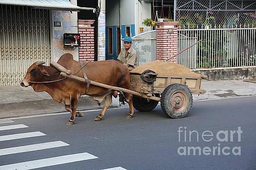 Chuck Kuhn - Ox Cart Vietnam