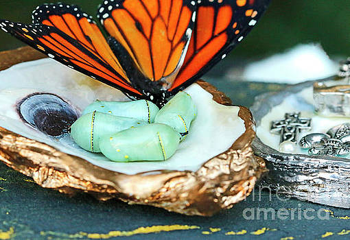 Oyster and Butterfly and Chrysalis by Luana K Perez