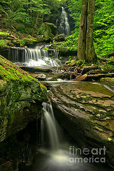 Adam Jewell - Ozone Falls Through The Forest