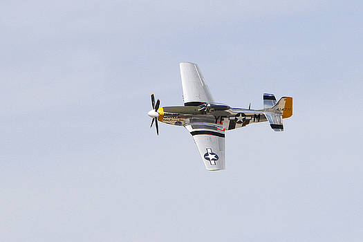 P-51 Mustang  by Shoal Hollingsworth