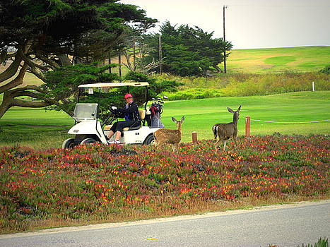 Joyce Dickens - Pacific Grove Deer And Golf Cart