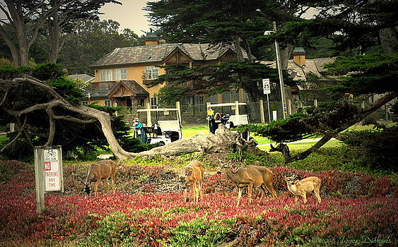 Joyce Dickens - Pacific Grove Deer Feeding Three