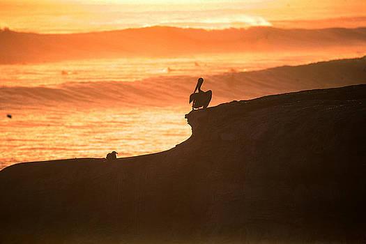 Chuck Kuhn - Pacific Ocean Pelican I
