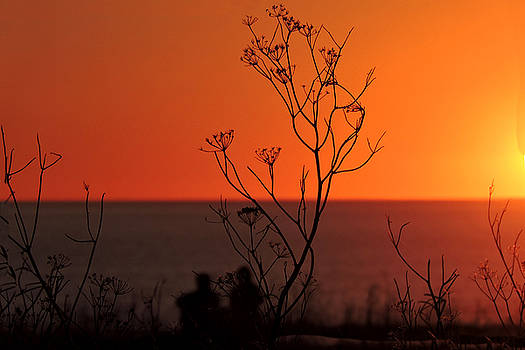 Pacific Sunset by Grace Dillon