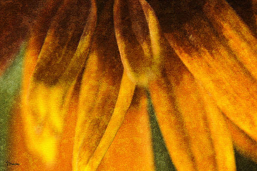 Teresa Mucha - Painted Daisy Petals
