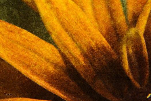 Teresa Mucha - Painted Daisy Sunburst