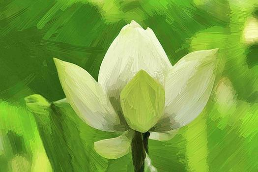 Painted Lotus by Geraldine Scull