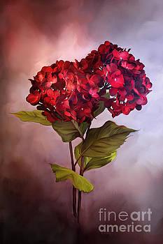 Painted Red Hydrangeas by Stephanie Frey