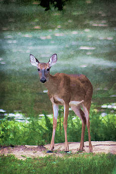 Painted Whitetail Deer by Kathy Clark