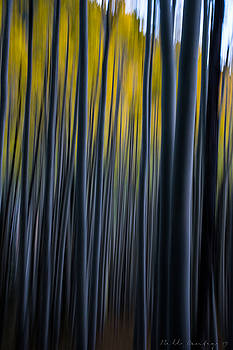 Painting the Aspens by Bill Cantey