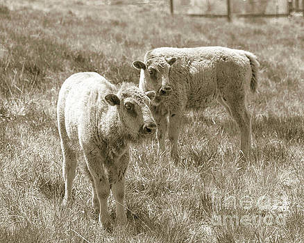 Pair of baby buffalos by Rebecca Margraf