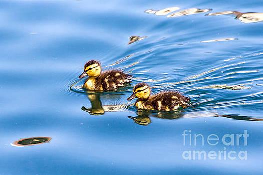 Kate Brown - Pair of Ducklings