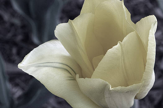 Carolyn Stagger Cokley - pale yellow