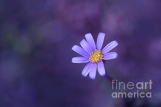 LHJB Photography - Palette of blue