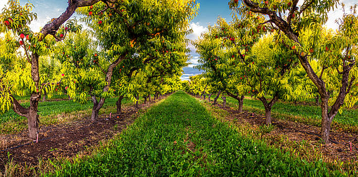 Palisade Peaches by JT Dudrow