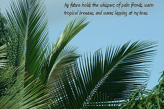 Palm Fronds and blue skies by Melodie Douglas