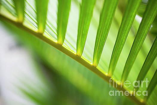Charmian Vistaunet - Palm Greenery