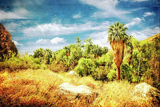 Palm Grove by Sandra Selle Rodriguez