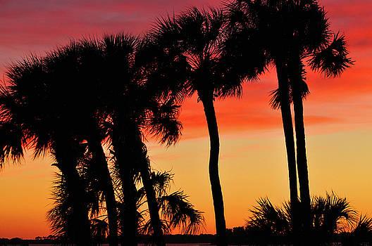 Palm Horizon by Peter  McIntosh
