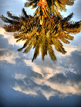 Emily Stauring - Palm n Reflection