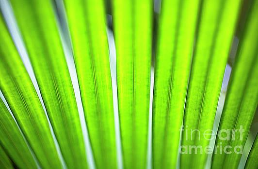 Charmian Vistaunet - Palm Patterns Macro