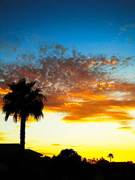 Palm Sundown by Nelson and Cheryl Strong