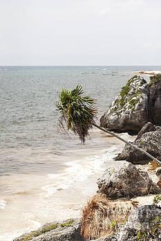 Palm Tree Along the Caribbean Coast by Brandon Alms