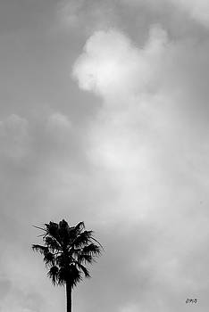 David Gordon - Palm Tree and Clouds