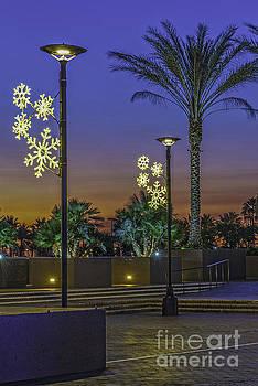 David Zanzinger - Palm Tree Sunrise