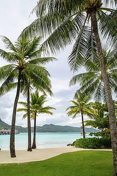 Palm Trees 1 by Sharon Jones