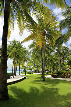 Palm Trees 2 by Sharon Jones