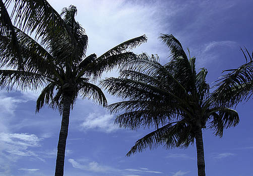 Palm Trees A Swayin by Crissy Anderson