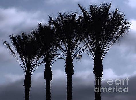 Gregory Dyer - Palm Trees on a cloudy day