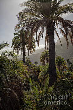 Palm trees by Patricia Hofmeester