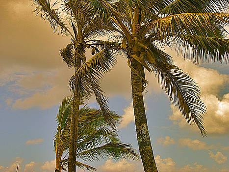 Palm Trees by Silvie Kendall